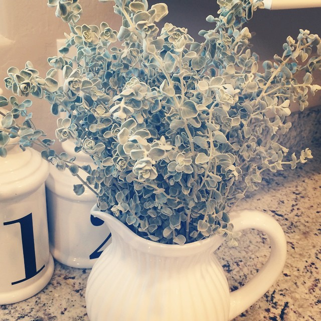 The landscapers in my neighborhood were trimming bushes, so I stole some clippings! I thought they looked pretty, but now I'm not sure if it just kinda looks like a vase full of bush clippings. ??? #thuglife