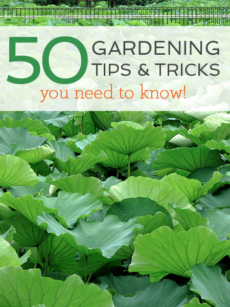 50 Gardening Tips and Tricks with Garden Collage
