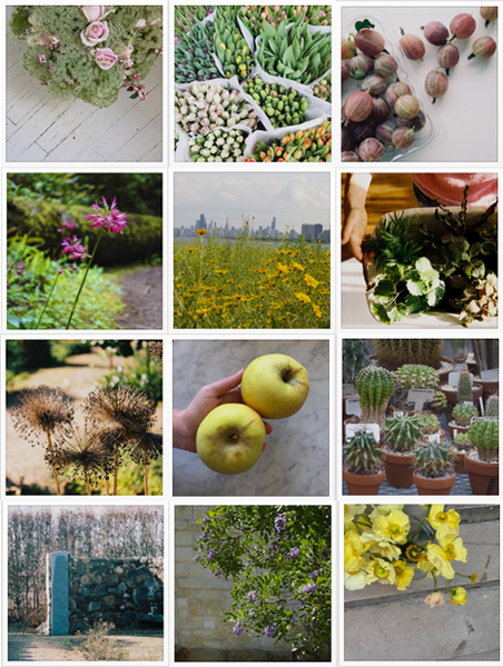 Lovely GARDEN COLLAGE INSTAGRAM