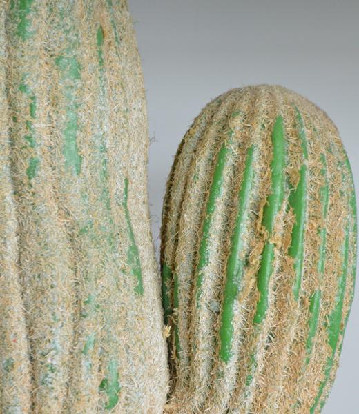 before cactus close up
